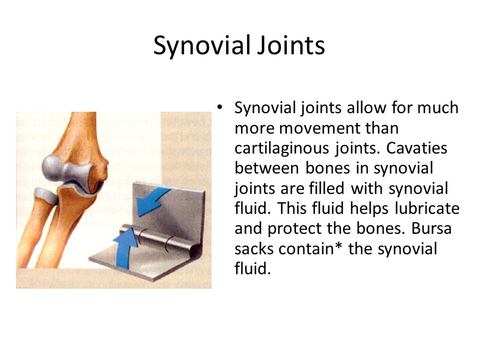 Synovial Joints Synovial joints allow for much more movement than cartilaginous joints.