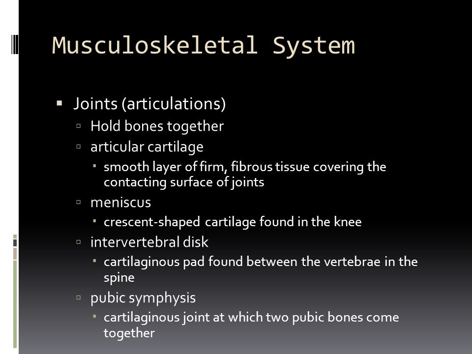 Musculoskeletal System  Joints (articulations)  Hold bones together  articular cartilage  smooth layer of firm, fibrous tissue covering the contac