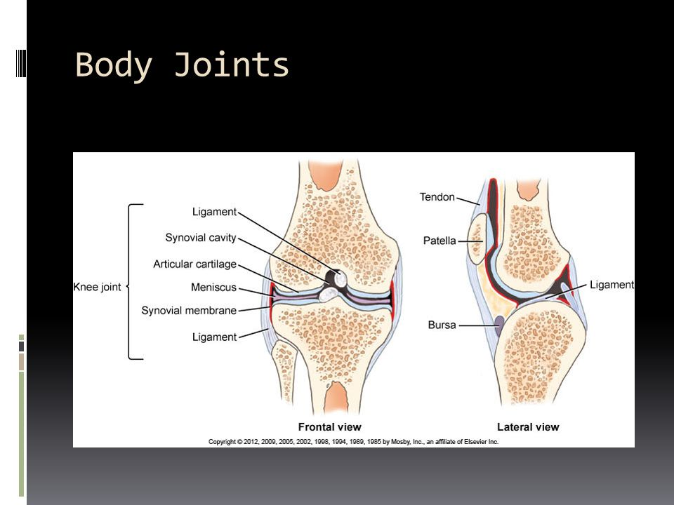 Body Joints