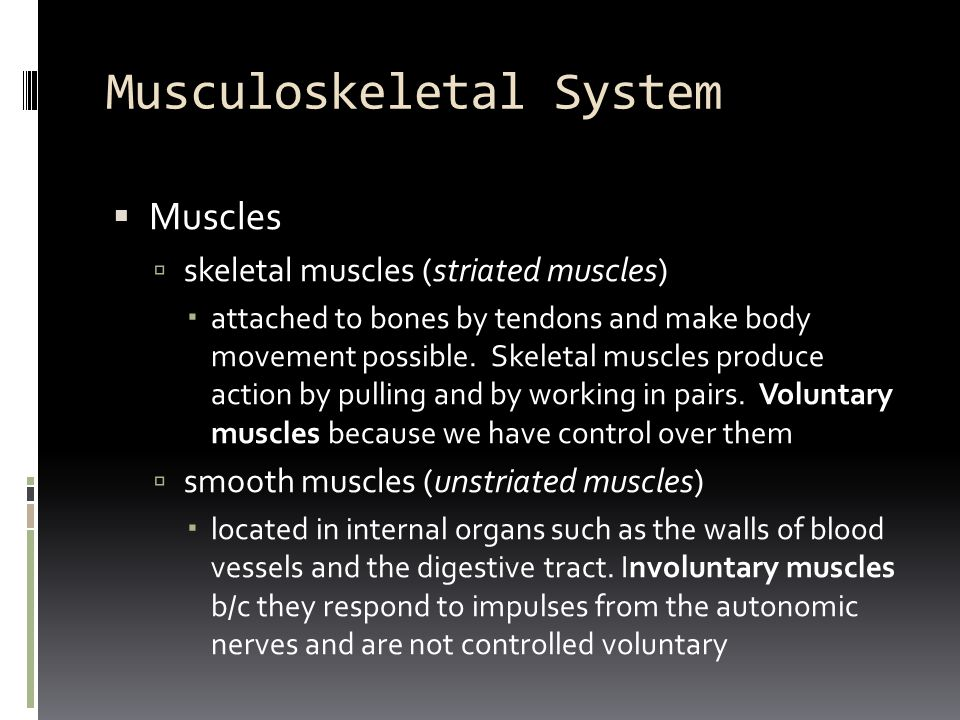 Musculoskeletal System  Muscles  skeletal muscles (striated muscles)  attached to bones by tendons and make body movement possible. Skeletal muscle