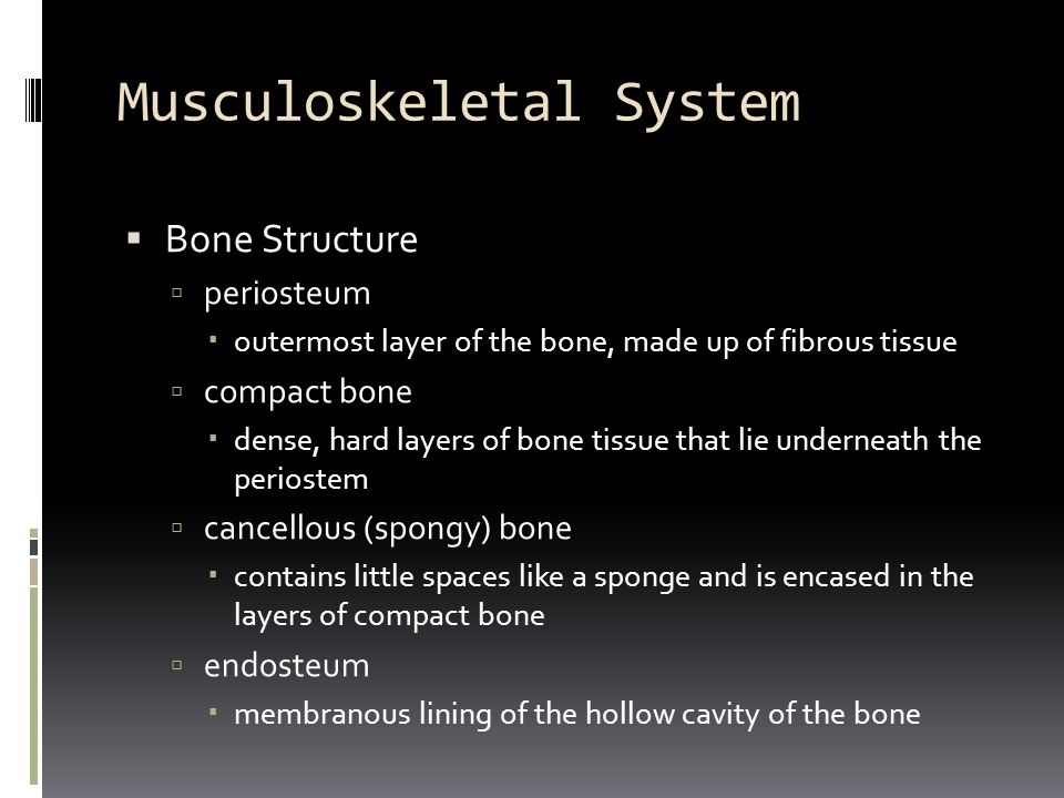 Musculoskeletal System  diaphysis  shaft of the long bones  epiphysis  end of each long bone  bone marrow  material found in the cavities of bones  red marrow: thick, bloodlike material found in flat bones and the ends of long bones; location of blood cell formation  yellow marrow: soft, fatty material found in the medullary cavity of long bones