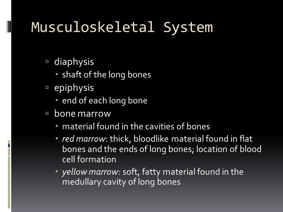 Musculoskeletal System  diaphysis  shaft of the long bones  epiphysis  end of each long bone  bone marrow  material found in the cavities of bon
