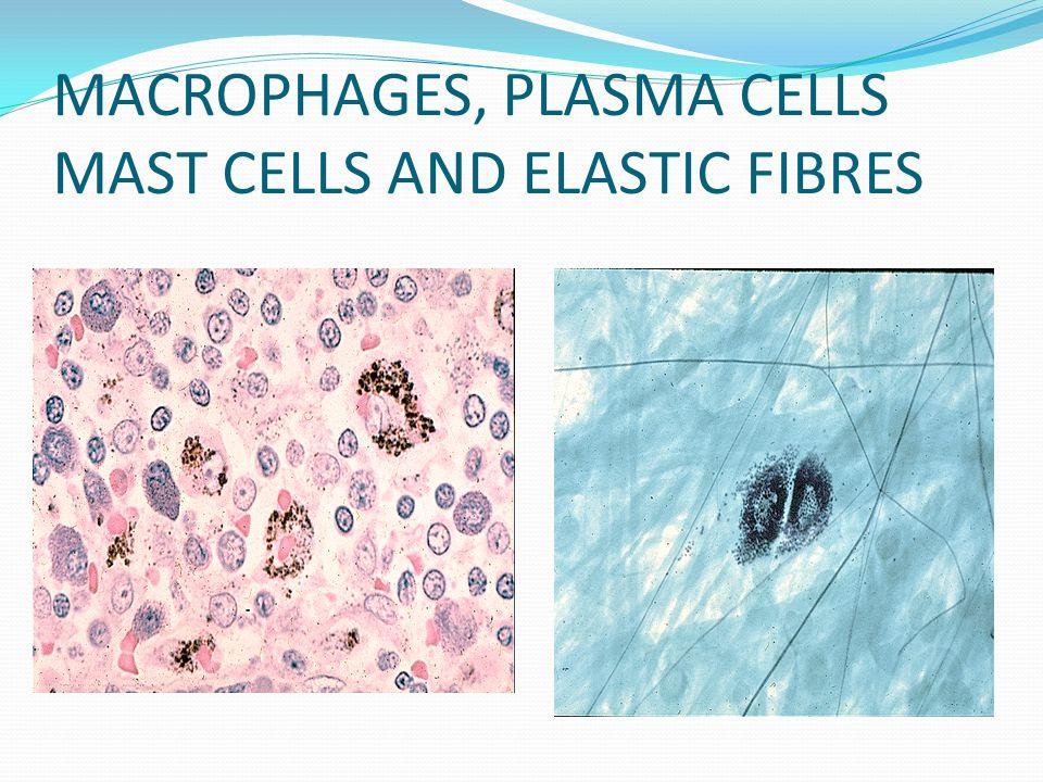 MACROPHAGES, PLASMA CELLS MAST CELLS AND ELASTIC FIBRES