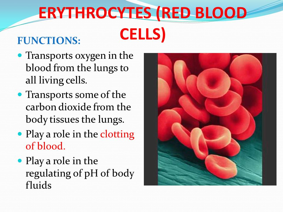 ERYTHROCYTES (RED BLOOD CELLS) FUNCTIONS: Transports oxygen in the blood from the lungs to all living cells. Transports some of the carbon dioxide fro