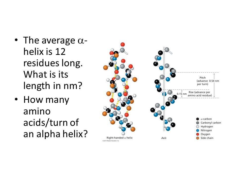 The average  - helix is 12 residues long.What is its length in nm.