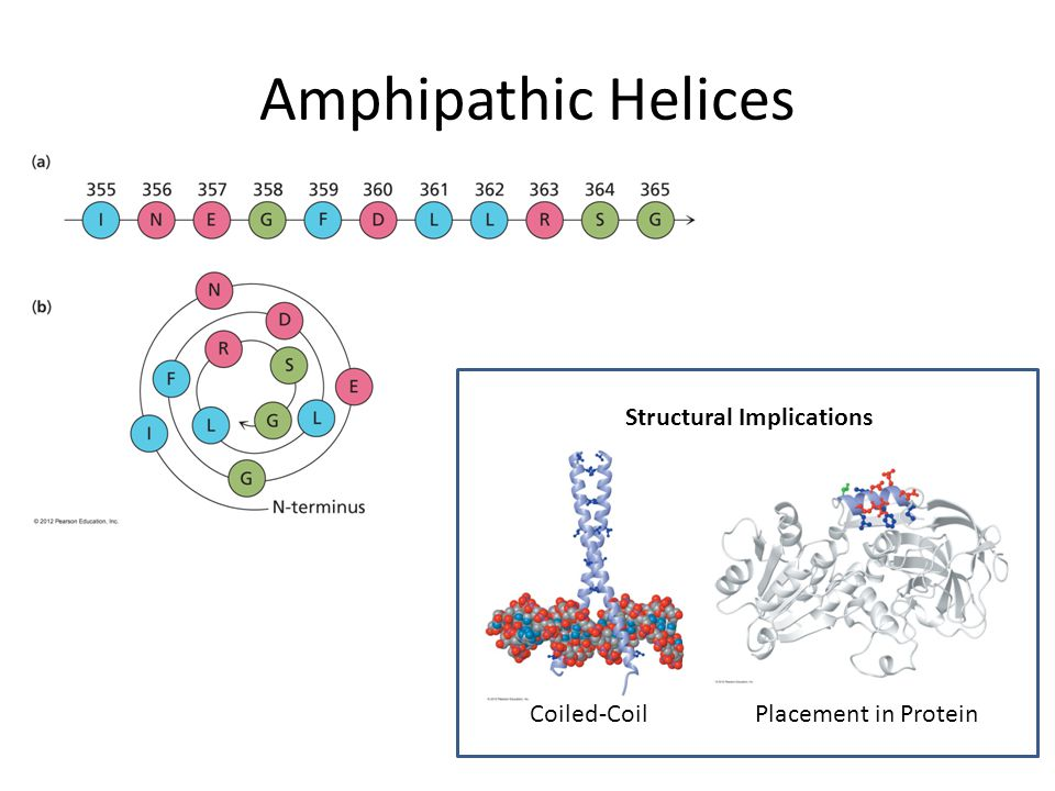 Amphipathic Helices Coiled-Coil Structural Implications Placement in Protein