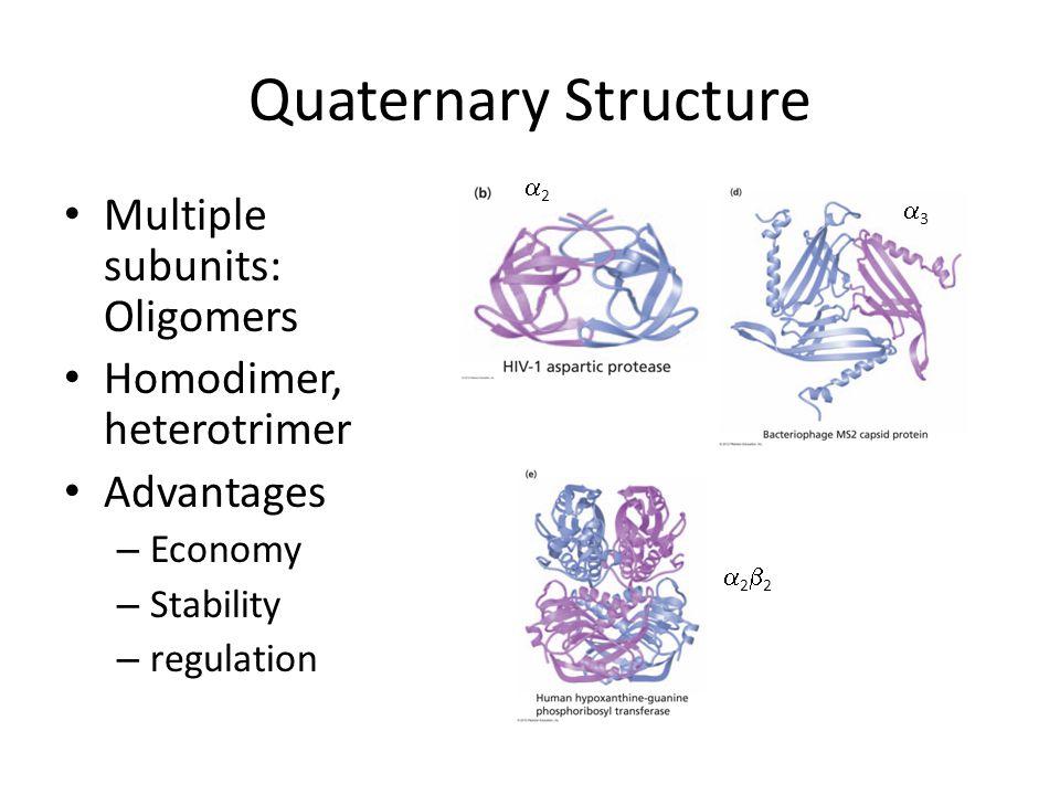 Quaternary Structure Multiple subunits: Oligomers Homodimer, heterotrimer Advantages – Economy – Stability – regulation 22 33 2222