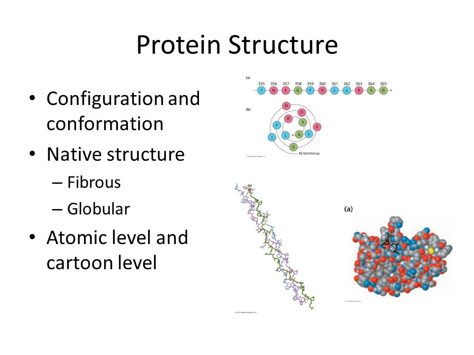 Protein Structure Configuration and conformation Native structure – Fibrous – Globular Atomic level and cartoon level