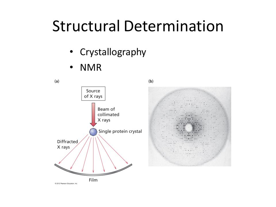 Structural Determination Crystallography NMR
