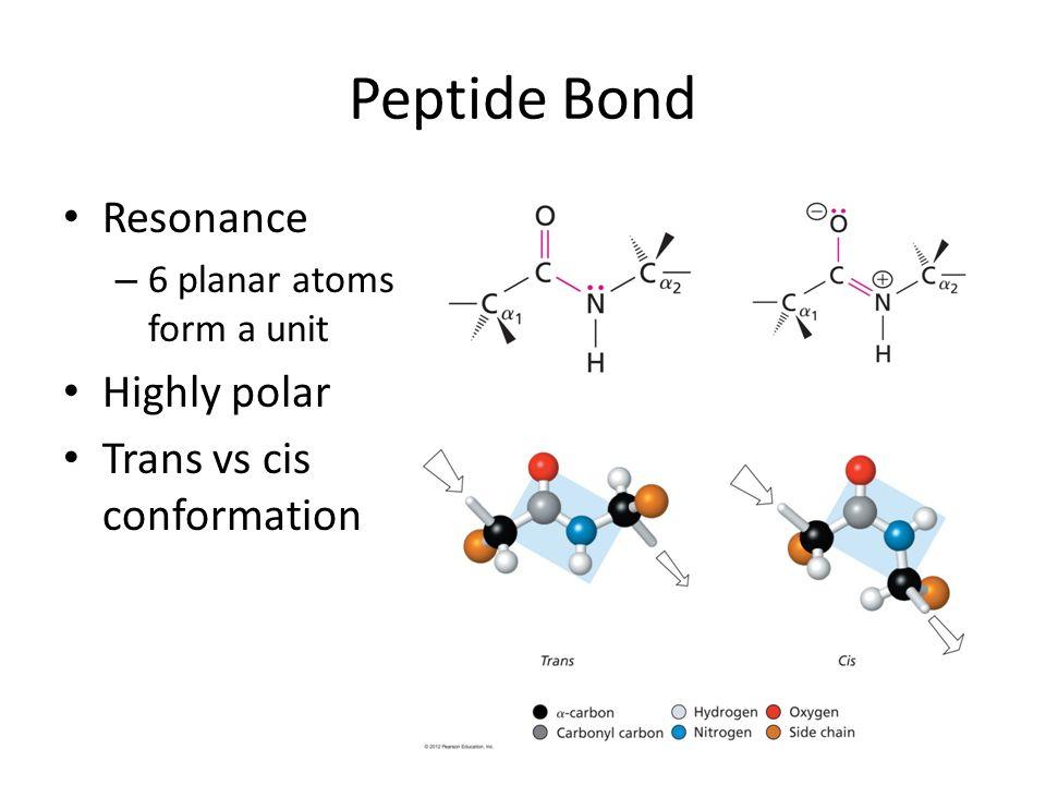 Peptide Bond Resonance – 6 planar atoms form a unit Highly polar Trans vs cis conformation