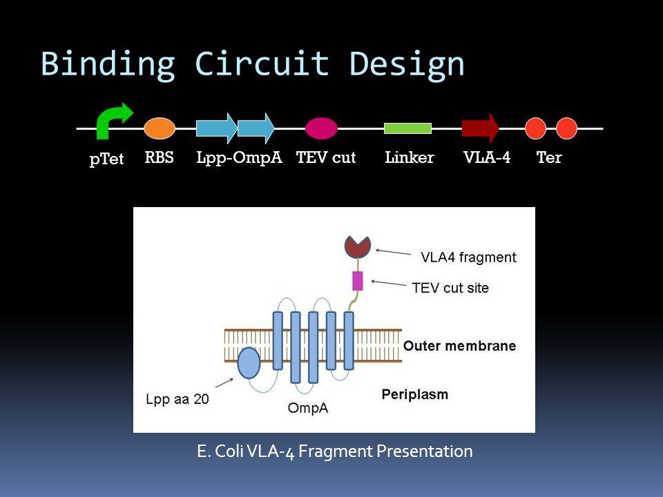 Lpp-OmpARBS pTet Ter TEV cutLinkerVLA-4 E. Coli VLA-4 Fragment Presentation Binding Circuit Design