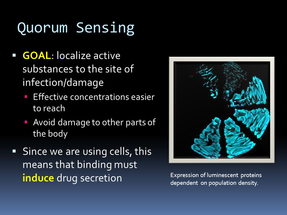  GOAL: localize active substances to the site of infection/damage  Effective concentrations easier to reach  Avoid damage to other parts of the body  Since we are using cells, this means that binding must induce drug secretion Expression of luminescent proteins dependent on population density.
