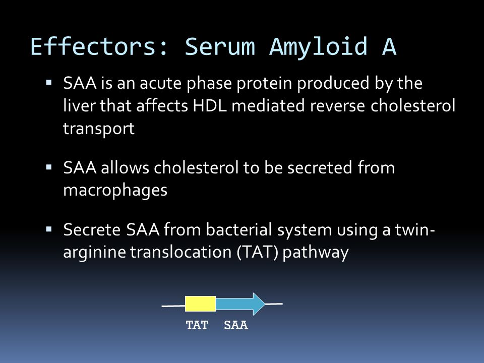  SAA is an acute phase protein produced by the liver that affects HDL mediated reverse cholesterol transport  SAA allows cholesterol to be secreted from macrophages  Secrete SAA from bacterial system using a twin- arginine translocation (TAT) pathway Effectors: Serum Amyloid A SAA TAT