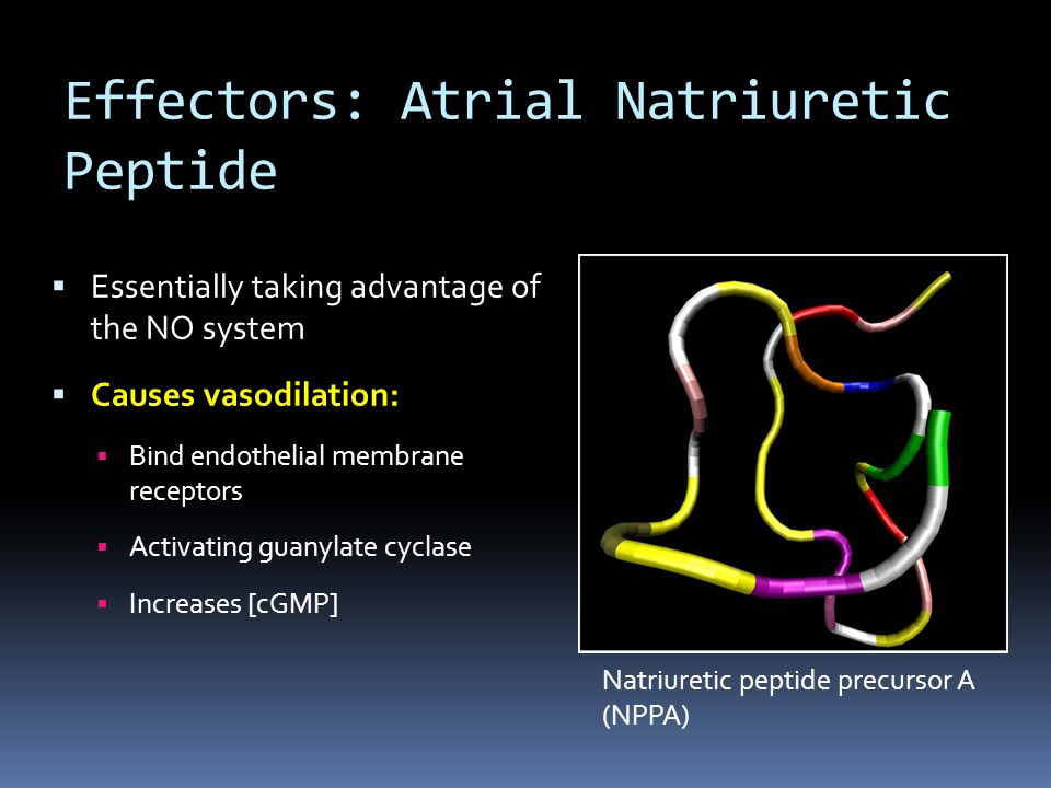 Effectors: Atrial Natriuretic Peptide  Essentially taking advantage of the NO system  Causes vasodilation:  Bind endothelial membrane receptors  A