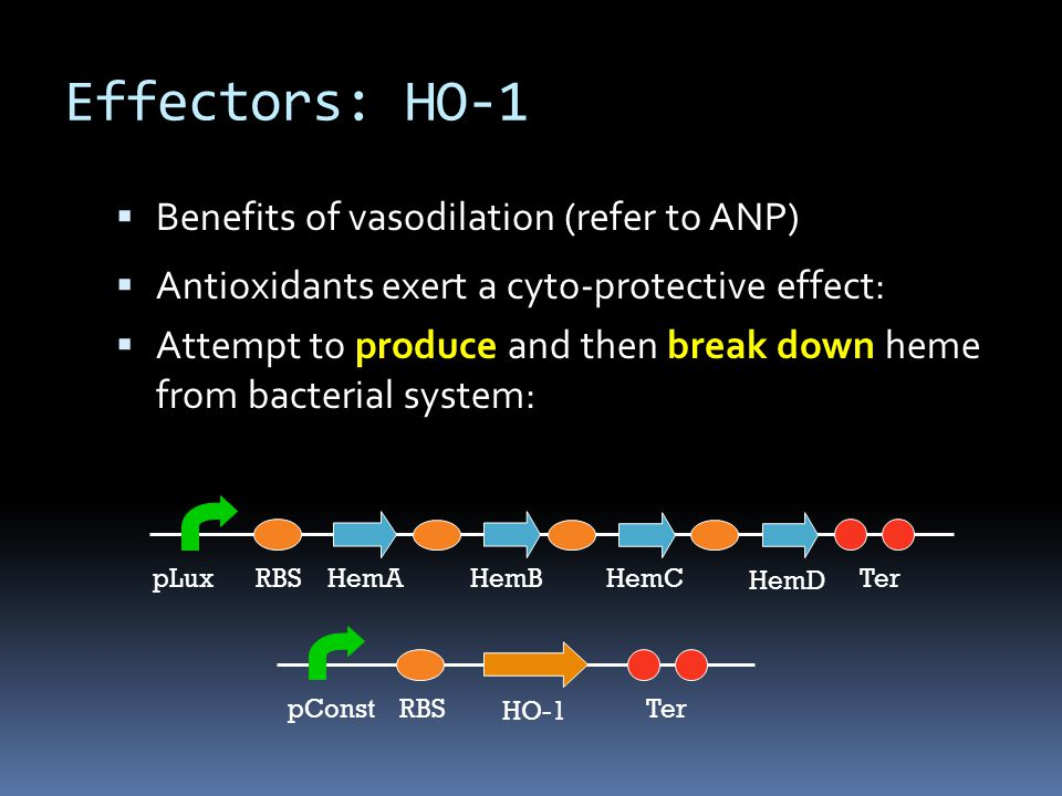  Benefits of vasodilation (refer to ANP)  Antioxidants exert a cyto-protective effect:  Attempt to produce and then break down heme from bacterial system: HemARBSpLuxTerHemBHemC HO-1 RBSpConstTer HemD Effectors: HO-1
