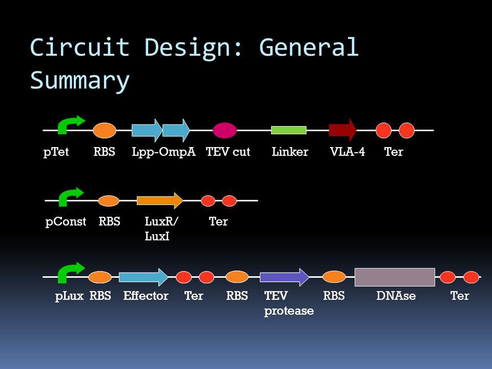 LuxR/ LuxI RBSpConstTer Lpp-OmpARBSpTetTer TEV cutLinkerVLA-4 Circuit Design: General Summary TerRBSTEV protease pLuxRBSEffectorDNAseTerRBSTEV protease pLuxRBSEffectorTer RBS