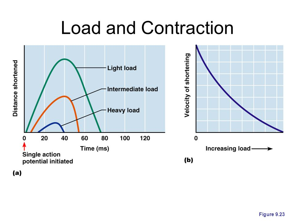 Load and Contraction Figure 9.23