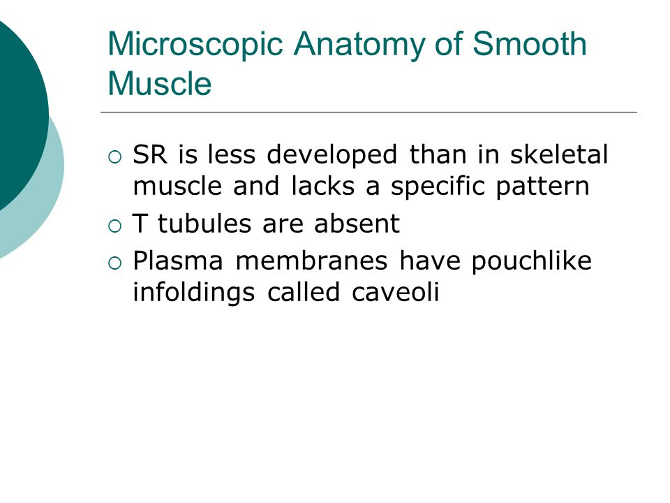 Microscopic Anatomy of Smooth Muscle  SR is less developed than in skeletal muscle and lacks a specific pattern  T tubules are absent  Plasma membranes have pouchlike infoldings called caveoli
