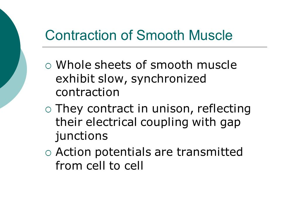 Contraction of Smooth Muscle  Whole sheets of smooth muscle exhibit slow, synchronized contraction  They contract in unison, reflecting their electrical coupling with gap junctions  Action potentials are transmitted from cell to cell