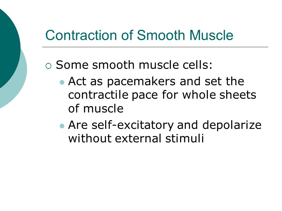 Contraction of Smooth Muscle  Some smooth muscle cells: Act as pacemakers and set the contractile pace for whole sheets of muscle Are self-excitatory and depolarize without external stimuli