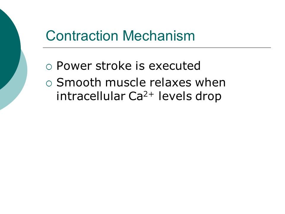 Contraction Mechanism  Power stroke is executed  Smooth muscle relaxes when intracellular Ca 2+ levels drop