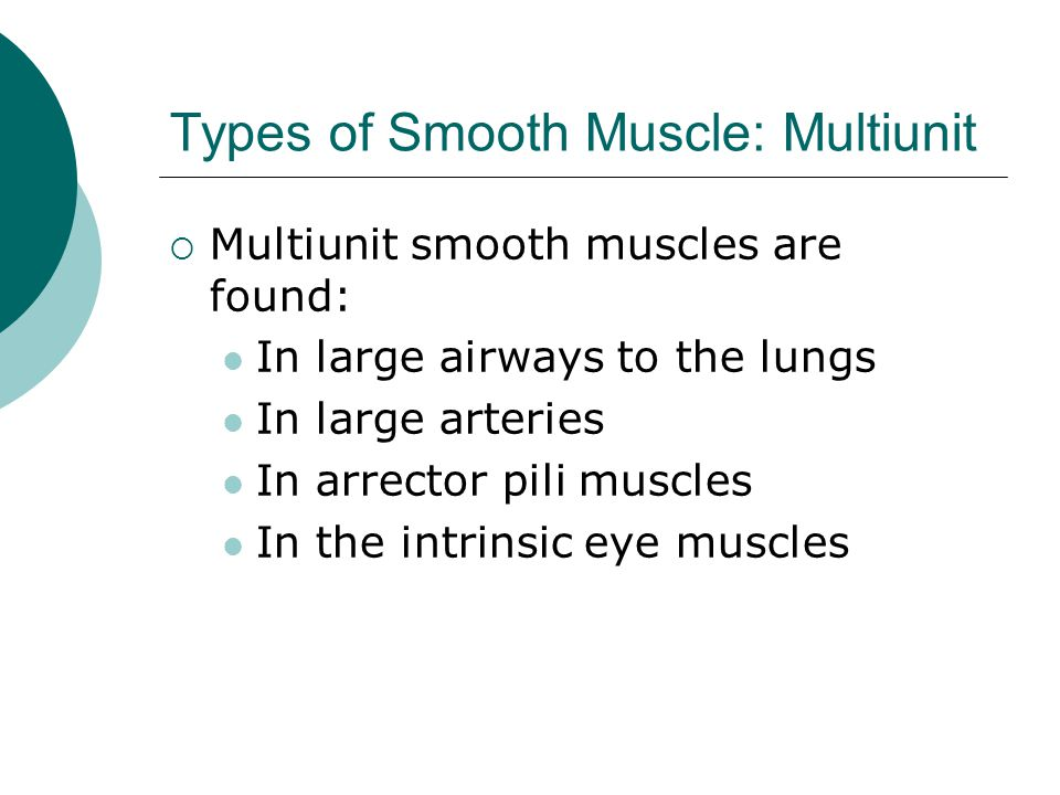 Types of Smooth Muscle: Multiunit  Multiunit smooth muscles are found: In large airways to the lungs In large arteries In arrector pili muscles In the intrinsic eye muscles