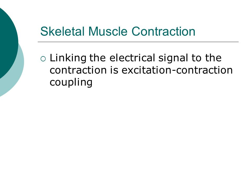 Skeletal Muscle Contraction  Linking the electrical signal to the contraction is excitation-contraction coupling