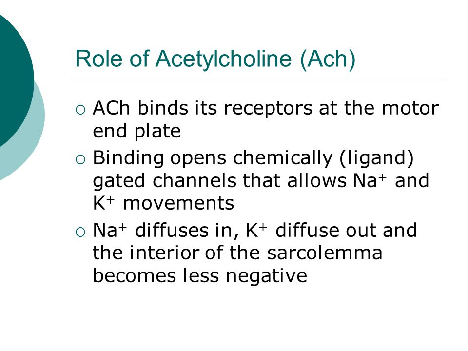 Role of Acetylcholine (Ach)  ACh binds its receptors at the motor end plate  Binding opens chemically (ligand) gated channels that allows Na + and K + movements  Na + diffuses in, K + diffuse out and the interior of the sarcolemma becomes less negative