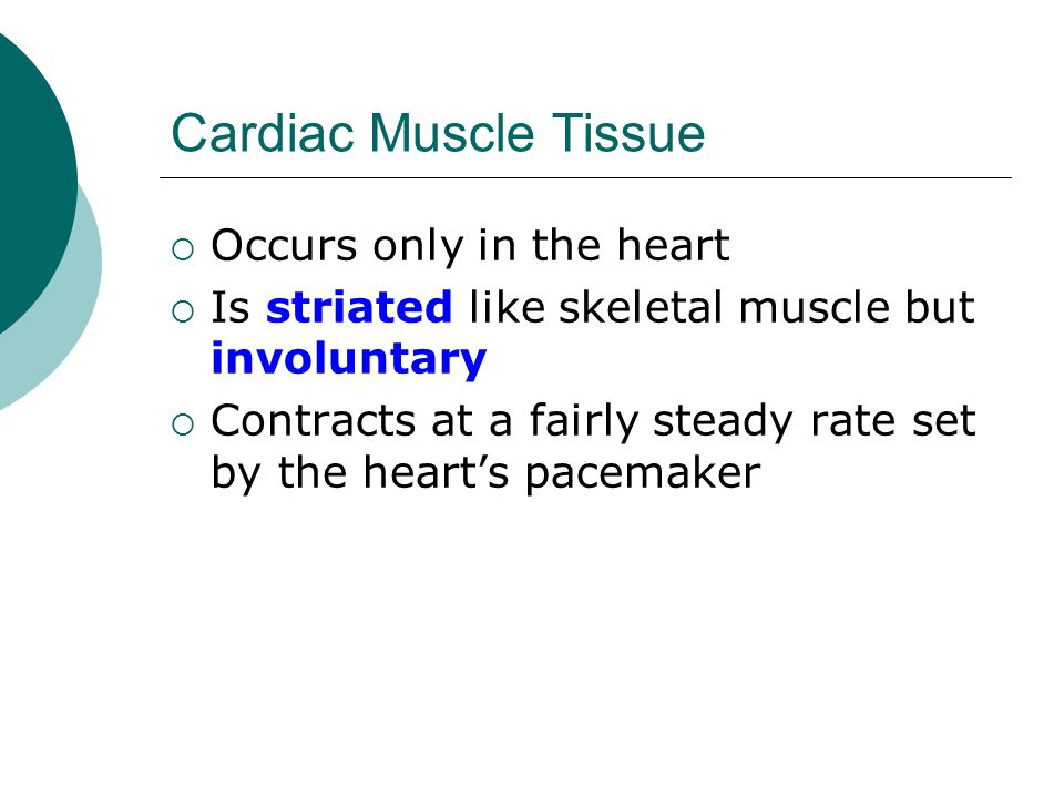 Cardiac Muscle Tissue  Occurs only in the heart  Is striated like skeletal muscle but involuntary  Contracts at a fairly steady rate set by the heart's pacemaker