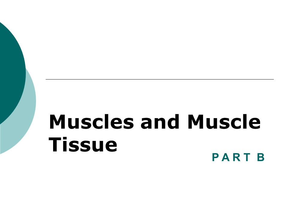 Muscles and Muscle Tissue P A R T B