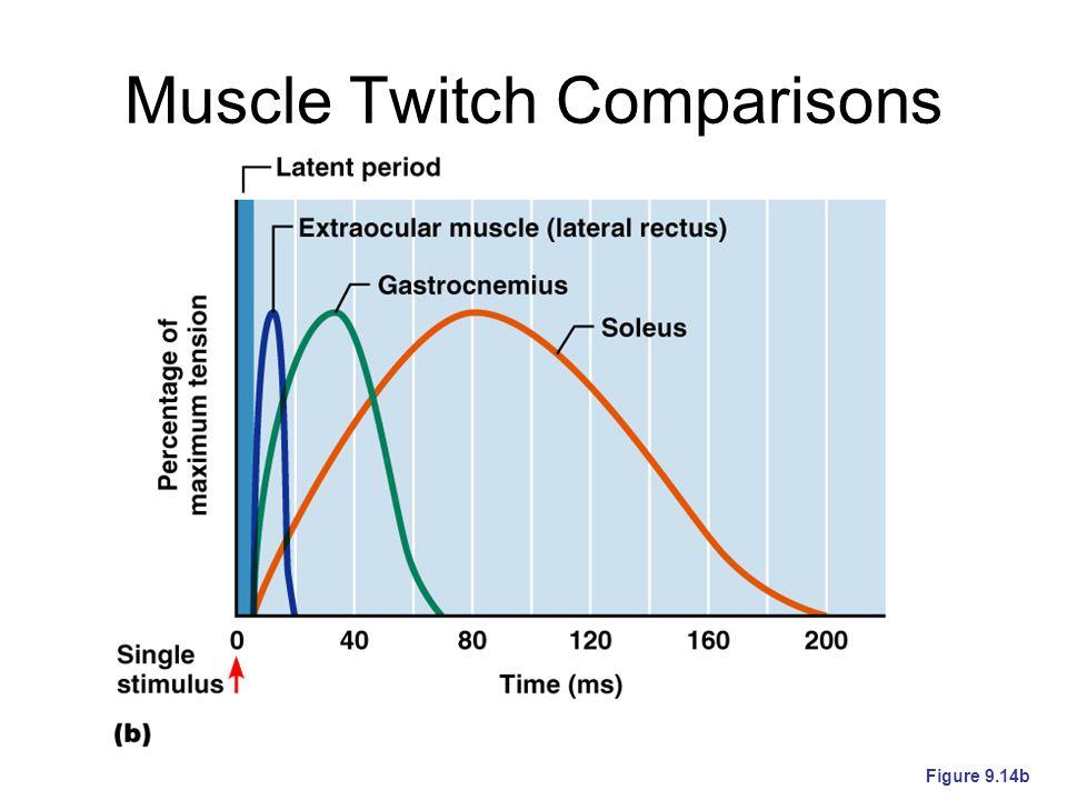 Muscle Twitch Comparisons Figure 9.14b