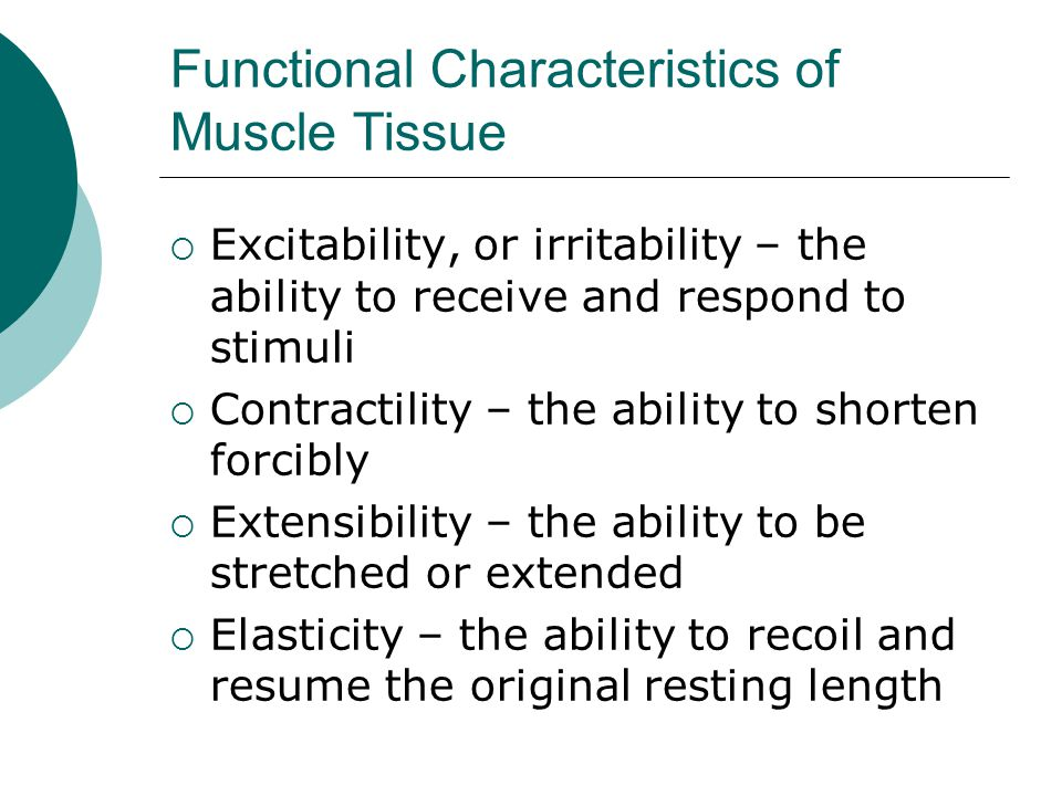 Functional Characteristics of Muscle Tissue  Excitability, or irritability – the ability to receive and respond to stimuli  Contractility – the ability to shorten forcibly  Extensibility – the ability to be stretched or extended  Elasticity – the ability to recoil and resume the original resting length