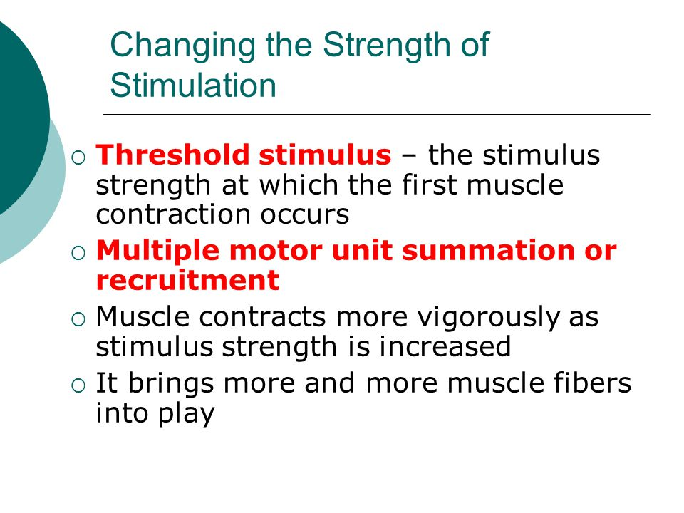 Changing the Strength of Stimulation  Threshold stimulus – the stimulus strength at which the first muscle contraction occurs  Multiple motor unit summation or recruitment  Muscle contracts more vigorously as stimulus strength is increased  It brings more and more muscle fibers into play