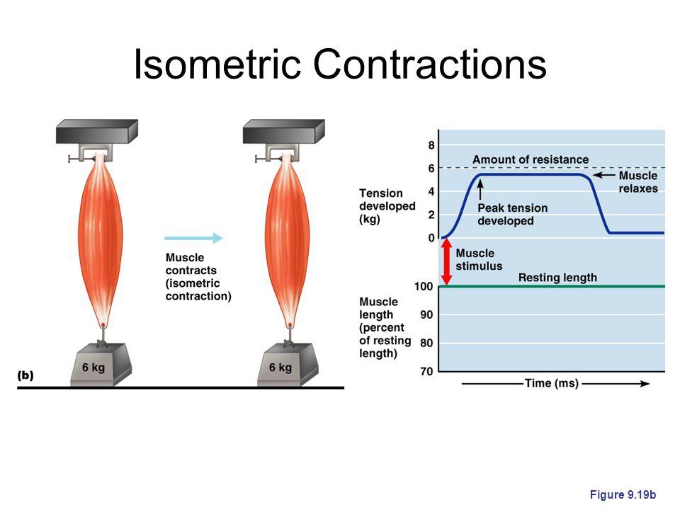 Isometric Contractions Figure 9.19b