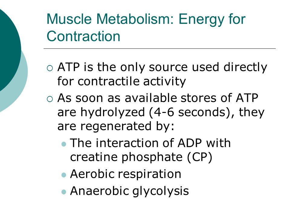 Muscle Metabolism: Energy for Contraction  ATP is the only source used directly for contractile activity  As soon as available stores of ATP are hydrolyzed (4-6 seconds), they are regenerated by: The interaction of ADP with creatine phosphate (CP) Aerobic respiration Anaerobic glycolysis