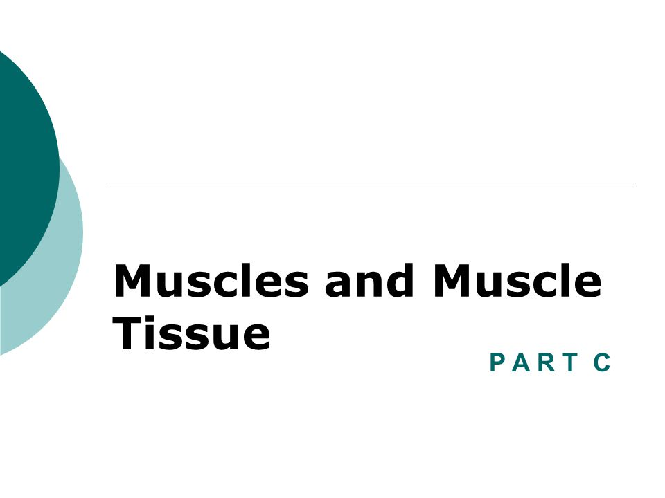 Muscles and Muscle Tissue P A R T C
