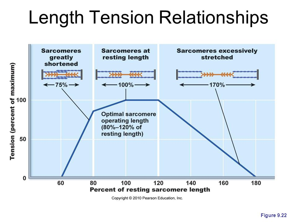 Length Tension Relationships Figure 9.22
