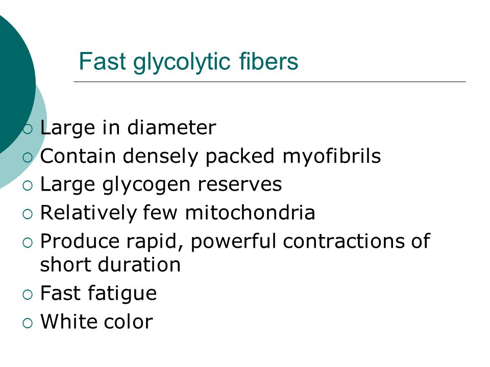  Large in diameter  Contain densely packed myofibrils  Large glycogen reserves  Relatively few mitochondria  Produce rapid, powerful contractions of short duration  Fast fatigue  White color Fast glycolytic fibers