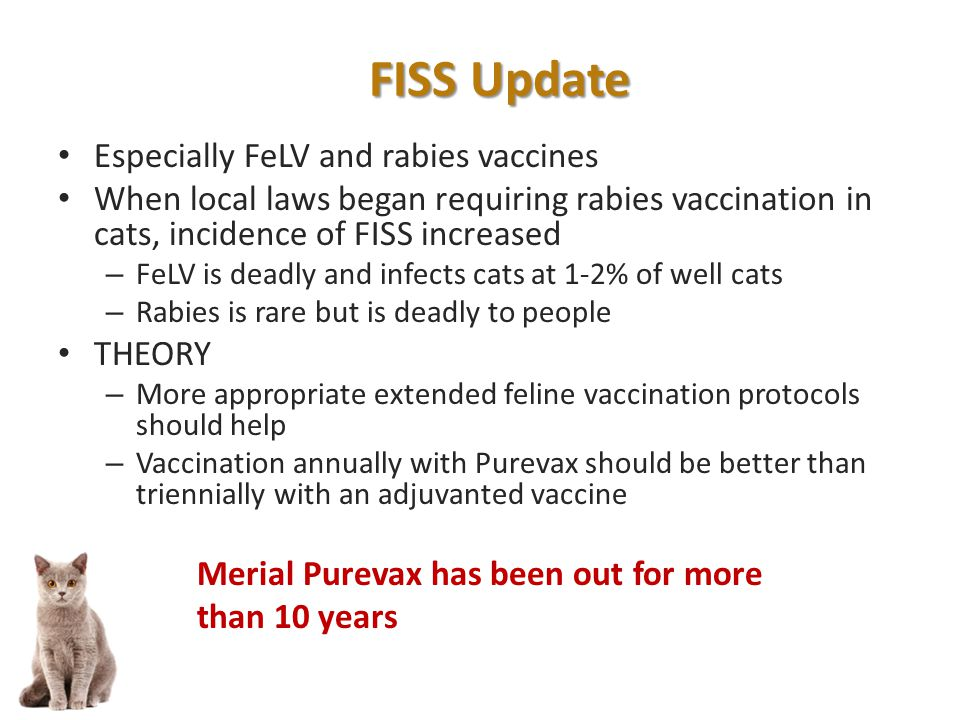 Especially FeLV and rabies vaccines When local laws began requiring rabies vaccination in cats, incidence of FISS increased – FeLV is deadly and infects cats at 1-2% of well cats – Rabies is rare but is deadly to people THEORY – More appropriate extended feline vaccination protocols should help – Vaccination annually with Purevax should be better than triennially with an adjuvanted vaccine Merial Purevax has been out for more than 10 years FISS Update