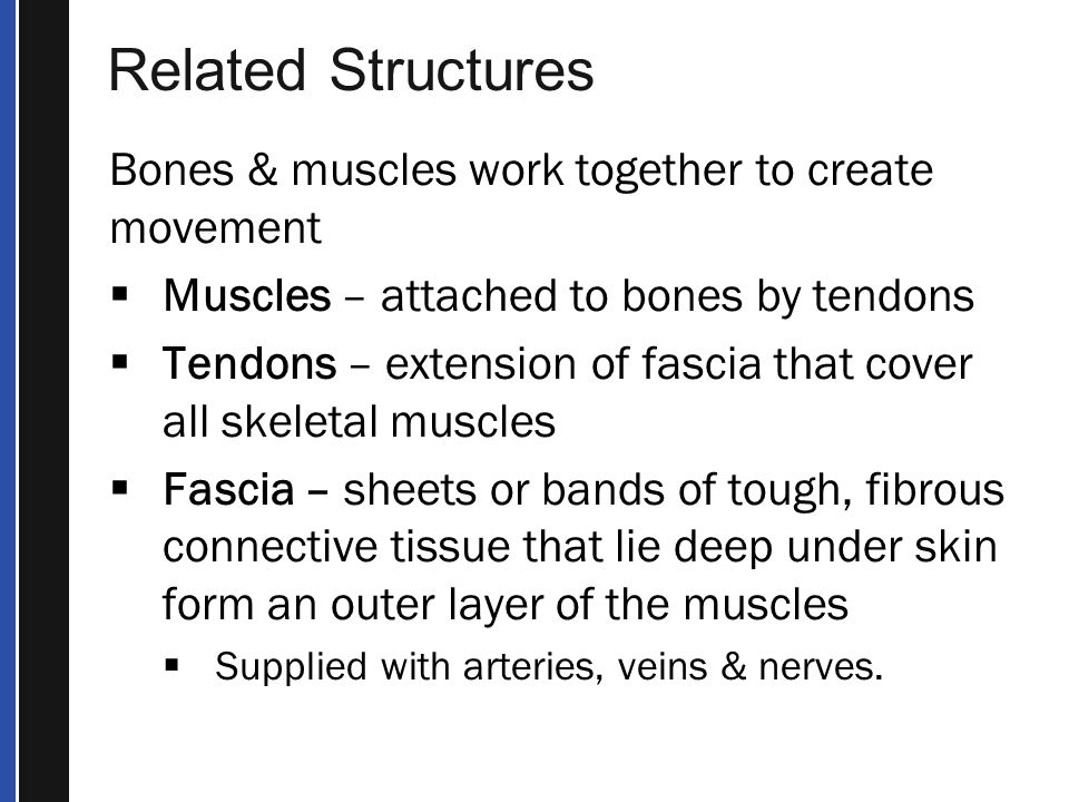 Terms, continued  Point tenderness — Tenderness sharply localized at the site of the injury.