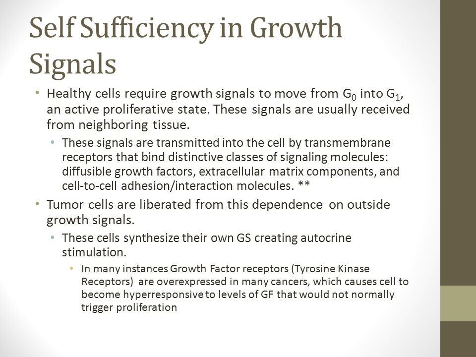Self Sufficiency in Growth Signals Proliferation can also be caused independent from ligands if the structural integrity of GF receptors is altered.