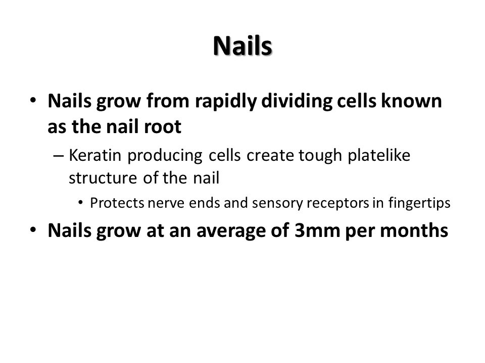 Nails Nails grow from rapidly dividing cells known as the nail root – Keratin producing cells create tough platelike structure of the nail Protects nerve ends and sensory receptors in fingertips Nails grow at an average of 3mm per months
