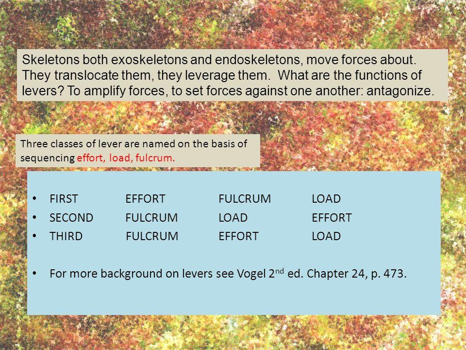 FIRSTEFFORT FULCRUM LOAD SECOND FULCRUM LOAD EFFORT THIRD FULCRUM EFFORTLOAD For more background on levers see Vogel 2 nd ed.