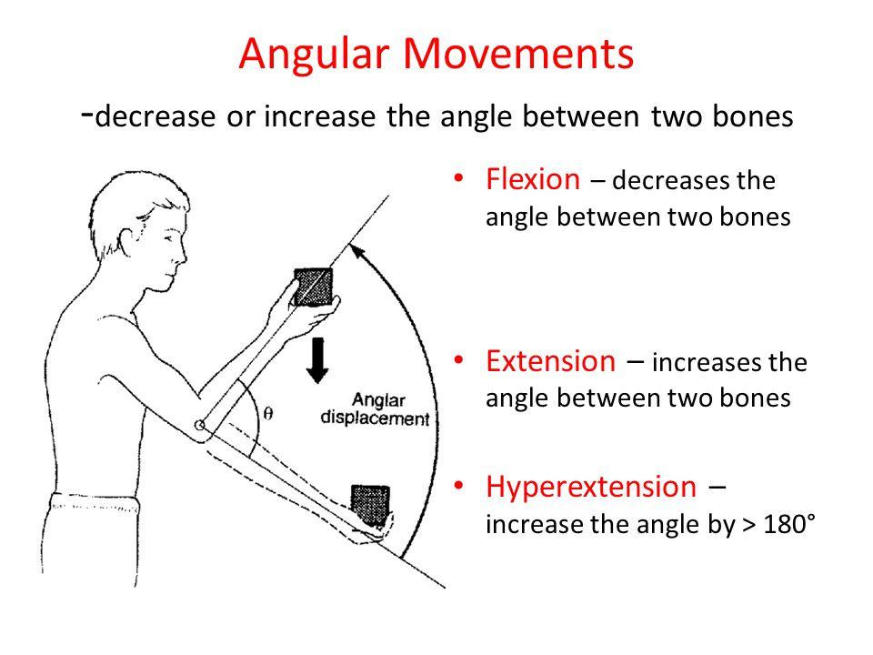 Angular Movements - decrease or increase the angle between two bones Flexion – decreases the angle between two bones Extension – increases the angle b