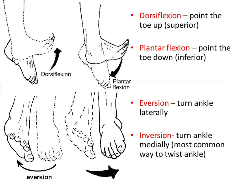 Dorsiflexion – point the toe up (superior) Plantar flexion – point the toe down (inferior) Eversion – turn ankle laterally Inversion- turn ankle media