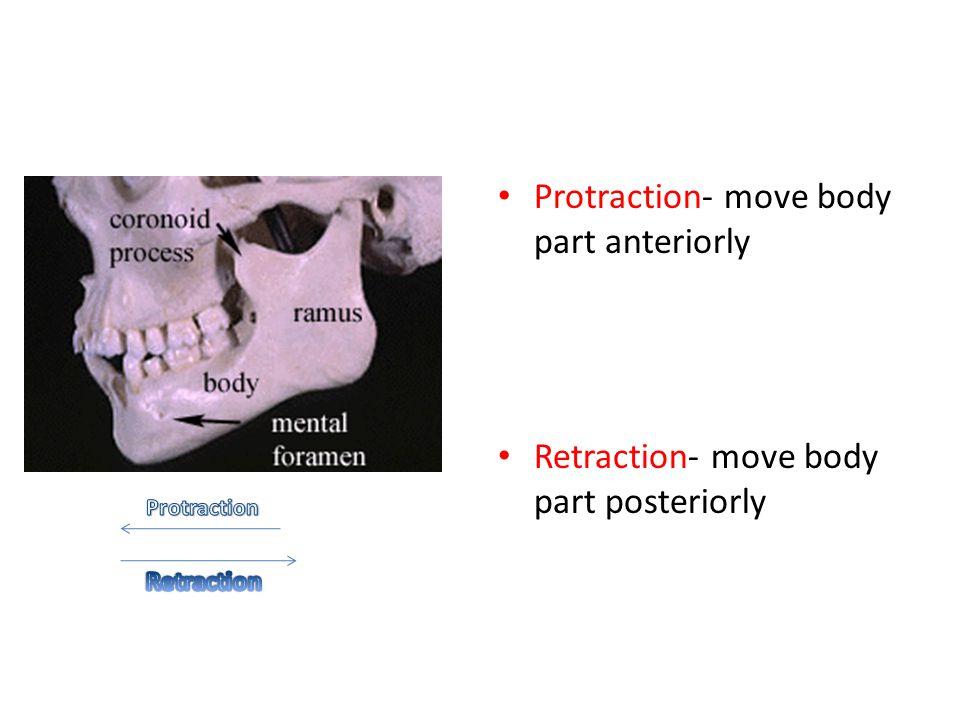 Protraction- move body part anteriorly Retraction- move body part posteriorly