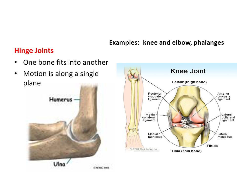 Hinge Joints One bone fits into another Motion is along a single plane Examples: knee and elbow, phalanges