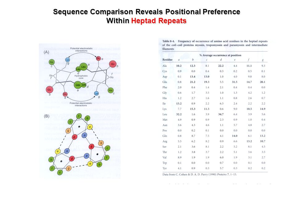 Sequence Comparison Reveals Positional Preference Within Heptad Repeats