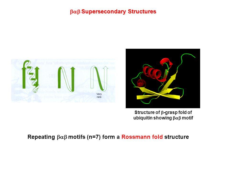  Supersecondary Structures Greek key motif Beta meander motif