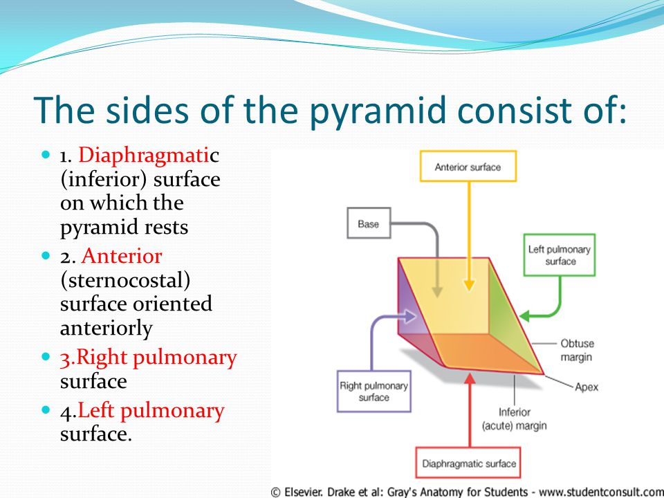 The sides of the pyramid consist of: 1. Diaphragmatic (inferior) surface on which the pyramid rests 2. Anterior (sternocostal) surface oriented anteri